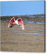 Ding Darling - Roseate Spoonbill - Taking Flight Canvas Print