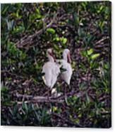 Ding Darling Wildlife Refuge I Canvas Print
