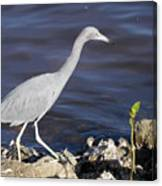 Ding Darling Wildlife Refuge Vii Canvas Print