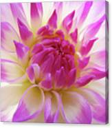 Dinner Plate Dahlia Flower Art Prints Canvas Floral Baslee Troutman Canvas Print