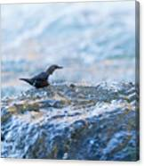 Dipper Searching For Food Canvas Print