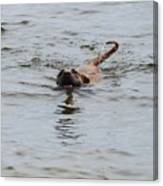 Dirty Water Dog Canvas Print
