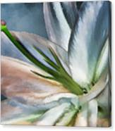 Dirty White Lily 2 Canvas Print