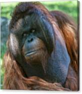 Disapproving Glance Canvas Print