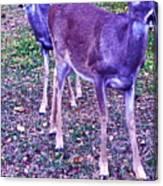Distrubing Deer Canvas Print