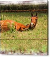 Disturbed Napping Canvas Print