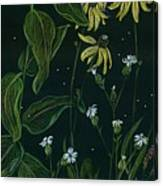 Ditchweed Fairy Milkweed Canvas Print