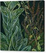 Ditchweed Fairy Mullein Canvas Print