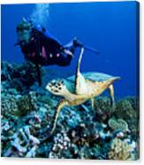 Diver And Green Sea Turtle Chelonia Canvas Print