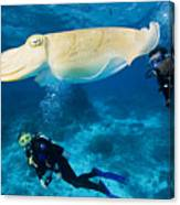 Divers Swim Near A Cuttlefish Canvas Print