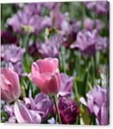 Divine Tulip Display Canvas Print