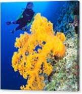 Diving, Australia Canvas Print