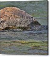 Diving Turtle Rock - Flathead River Middle Fork Mt Canvas Print