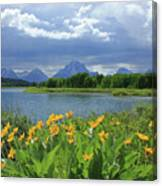 Dm9235 Mt. Moran From Oxbow Bend Canvas Print