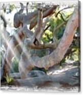 Do-00044 Mount Ettalong Canvas Print