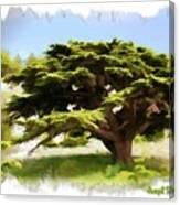 Do-00319 Cedar Tree Canvas Print
