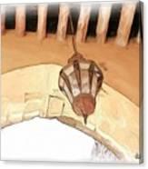 Do-00326 Old Lantern In Beiteddine Canvas Print