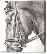 Dobbin Canvas Print