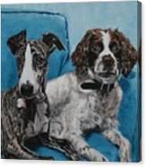 Dobby And Mocha Canvas Print