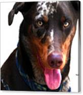 Doberman Australian Shepherd Cattle Dog  Canvas Print