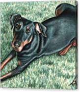 Dobermann Canvas Print