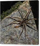 Dock Spider Canvas Print
