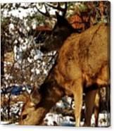 Doe And Buck Canvas Print