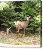 Doe At Suttle Lake Canvas Print