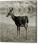 Doe By The Waters Edge Canvas Print