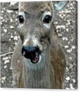Doe Eyed Deer Talk Canvas Print