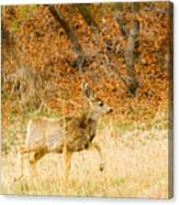 Doe High Stepping On Bald Mountain Canvas Print