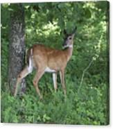 Doe In The Forest Canvas Print