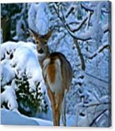 Doe In The Snow In Spokane 2 Canvas Print