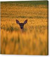 Doe In The Wheat Canvas Print