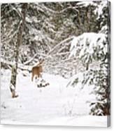 Doe In Winter Snow  Canvas Print