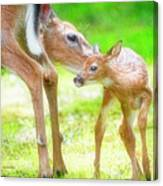 Doe Nuzzles Her Fawn Canvas Print