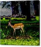 Doe - Oil Painting Print Canvas Print