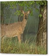 Doe On A Foggy Morning In Wyoming Canvas Print
