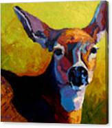 Doe Portrait V Canvas Print