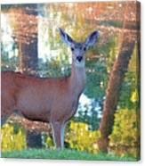 Doe Surprise Canvas Print