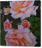 Does Roses Has Thorns Or Does Thorns Has Roses Canvas Print