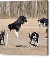 Dog 380 Canvas Print