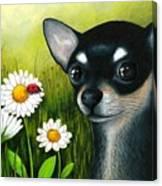Dog 79 Chihuahua Canvas Print