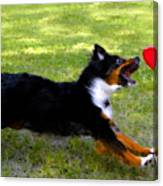 Dog And Red Frisbee Canvas Print