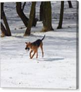 Dog And Winter Canvas Print