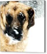 Dog Blizzard - German Shepherd Canvas Print