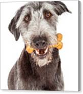 Dog Carrying Bone Biscuit In Mouth Canvas Print