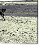 Dog Frolicking On A Beach Canvas Print