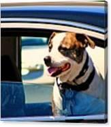 Dog In Car Canvas Print