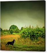 Dog In Chesire England Landscape Canvas Print